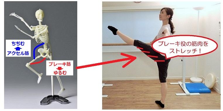 バレエ整体・関節運動